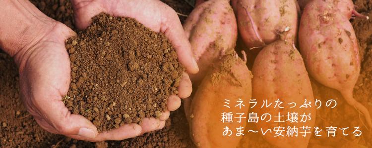 種子島の土壌