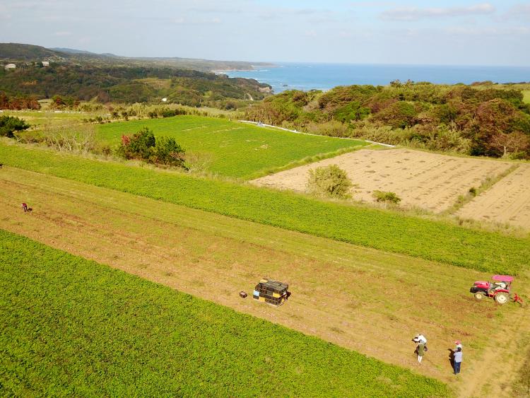 安納芋発祥の地 種子島