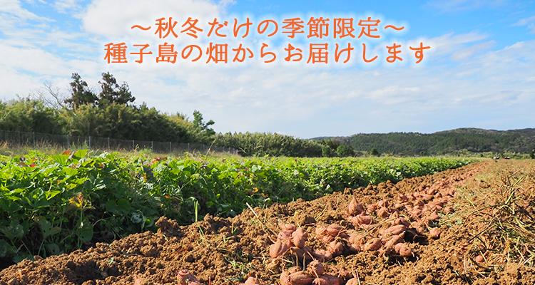 種子島の畑から